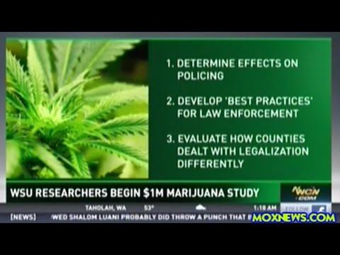 Washington State University Begins 3 Year Study On The Effects Of Marijuana Legalization