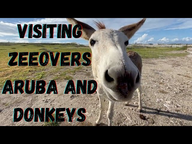 VISITING ZEEOVERS RESTAURANT ARUBA AND SOME DONKEYS NEAR BABY BEACH
