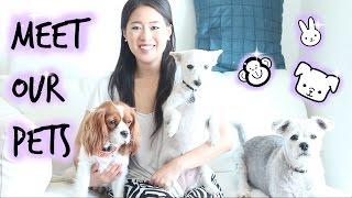 Meet Our Pets   Cavalier King Charles Spaniel   Funston Tv
