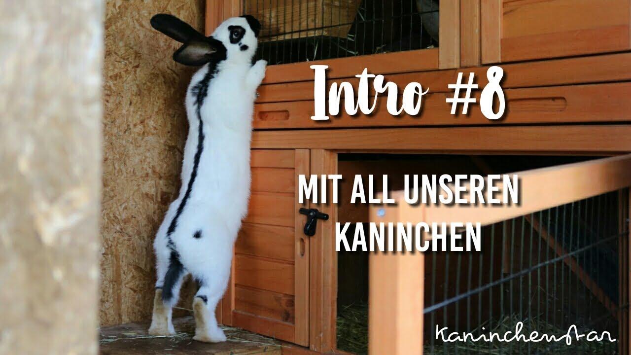 13+ Unser erstes Video 8   INTRO 8 🐰🐱   Kaninchenstar Image