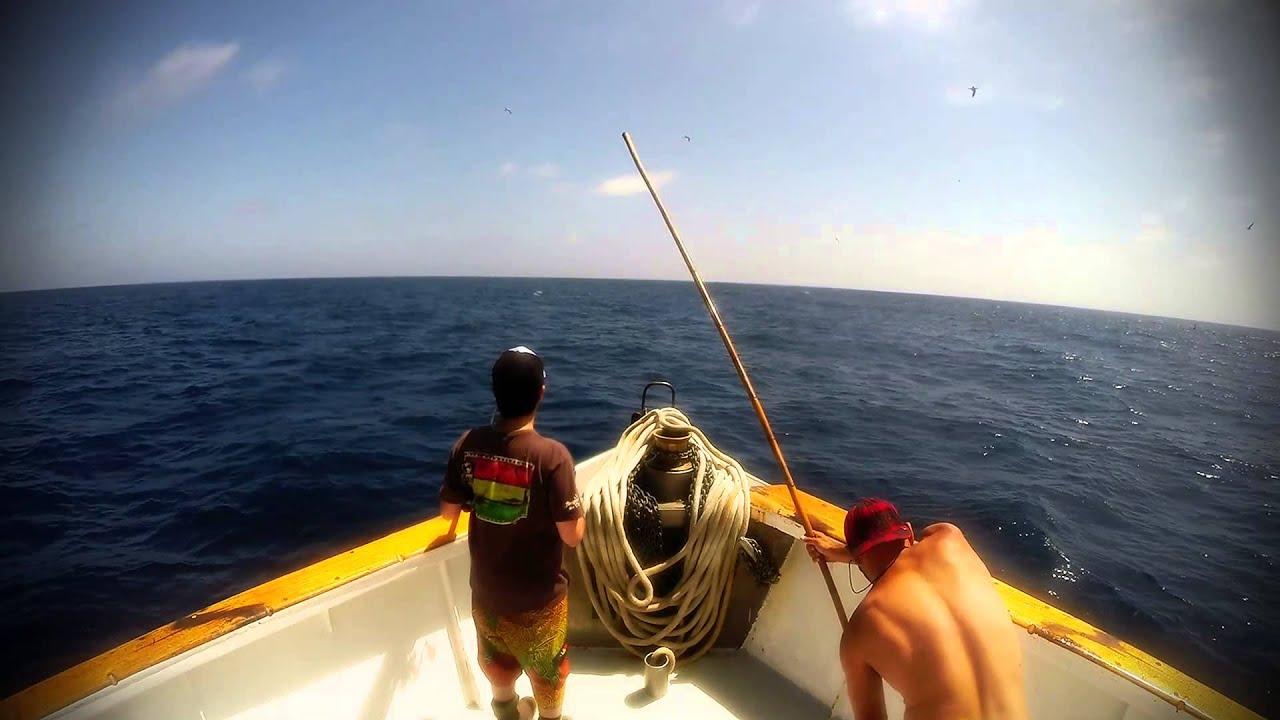Epic surface iron yellowtail fishing on the mission belle for Point loma sportfishing fish count
