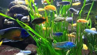 Wow: viele bunte Fische (verschiedene Barsche) in der Wilhelma / Colourful Percidae
