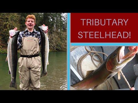 Washington State Steelhead Fishing 2020(Tributary Steelhead)