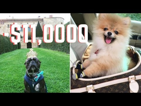 the-10-most-expensive-dog-breeds-|-🐶🤑