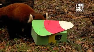 Zoo Elf Delivers Gifts to Animals - Cincinnati Zoo