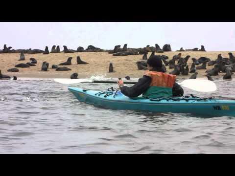 Namibia, kayak tour Walvis Bay