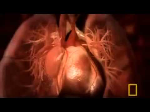 National Geographic - Inside the Living...