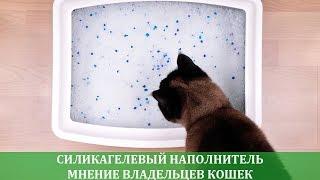Силикагелевый наполнитель отзывы владельцев кошек