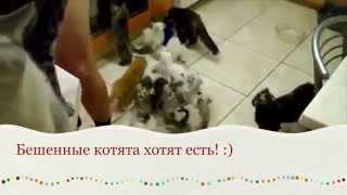 Забавные котята хотят есть