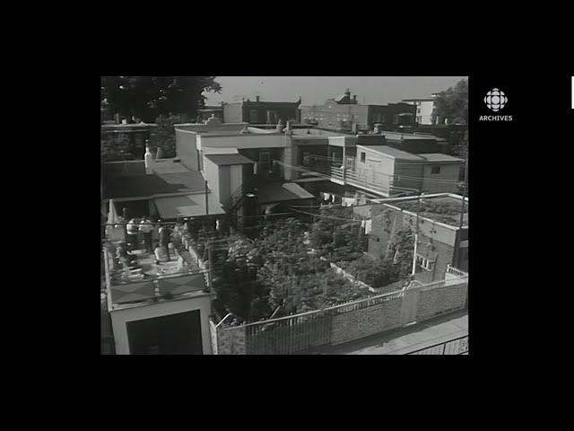 En 1969, portrait de la communauté italienne de Montréal