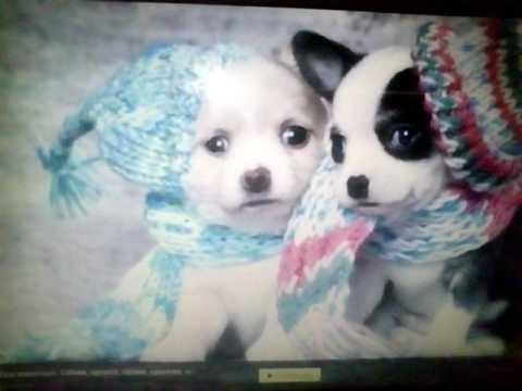 Картинки с собаками под КЛИП Я ХОЧУ