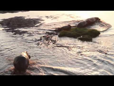Zambia with Piper & Heath Safaris