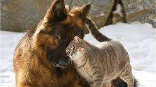 Кошка и собака.Дружба кошки с собакой. Весёлая жизнь животных.