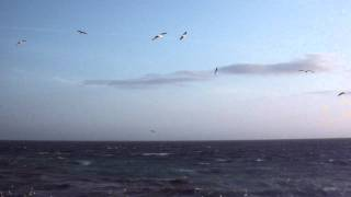 Terns and Seagulls on the Wind and Waves at Carnsore Point