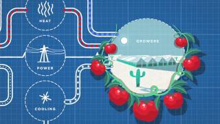 Sundrop Farms Explained use seawater and sunlight to grow sustainable food in the desert