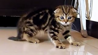 I'm the filmstar   Cute Kitten named Neo
