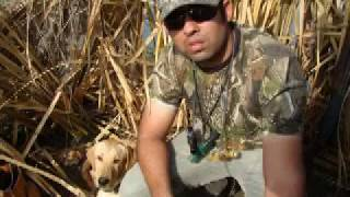 Duck Hunting - Labrador Retriever Puppy