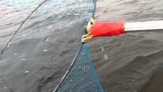 Човен фрегат 280 Е рибалка на спінінг,щука