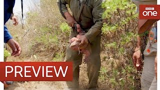 Pink Iguana discovery - Galapagos: Episode 1 Preview - BBC One