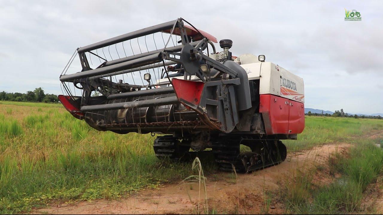 Rice Harvester Kubota DC-70 and Yanmar YH700  Millennial Farmer Harvesting 