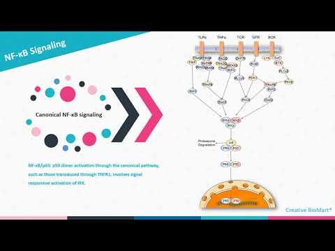 NF-κB Signal Pathway