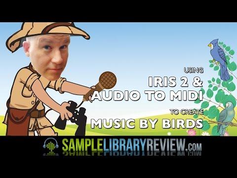 Using Audio to MIDI and Iris 2 to Create Music By Birds