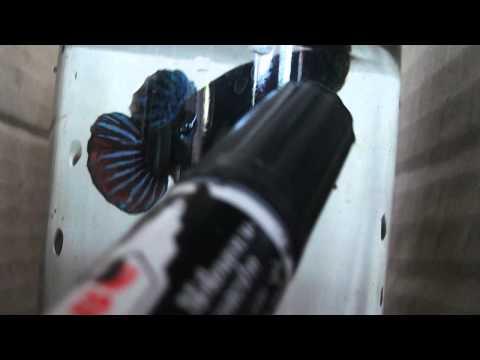 ปลากัดเก่ง เบอร์ 60 ลูกร้อยมาเลย์ สนใจโทร.088-8871641