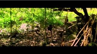 Video Manjadikuru - Anjali Menon movie - Prithviraj download MP3, 3GP, MP4, WEBM, AVI, FLV Oktober 2017