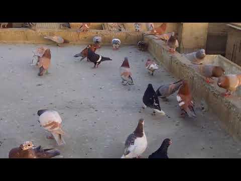 Musharaf ali banarci lalband | FunnyCat TV