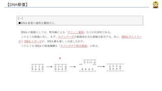DNA修復 【高校生物】