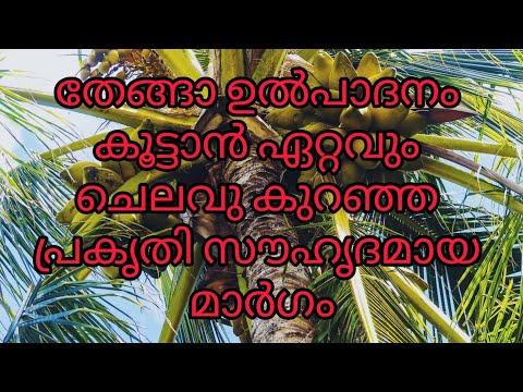 തെങ്ങിന്റെ കായ്ഫലം കൂട്ടാൻ എളുപ്പവഴി | How to increase coconut Production | Coconut cultivation tip