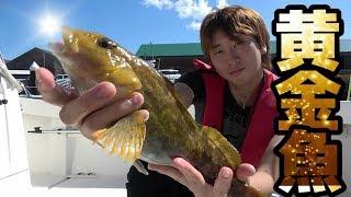 北海道の海で釣りしたらとにかく色んな魚が釣れた!【爆釣回】