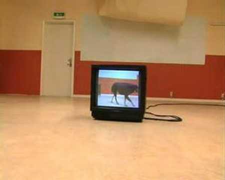 Dog - TV
