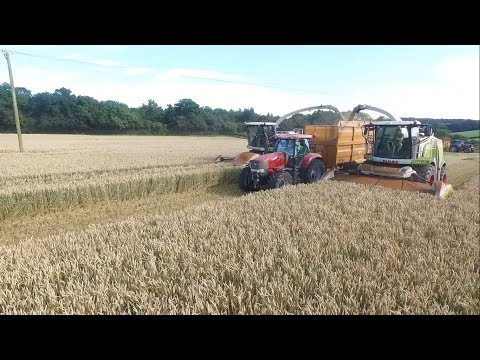 S C Marsh contractors chopping wholecrop 2 foragers