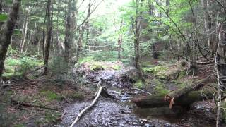 Fundy National Park-East Branch Trail