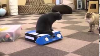 Приколы с животными Коробка   ловушка для кота)