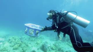 clip of PROTECTING CORAL REEFS