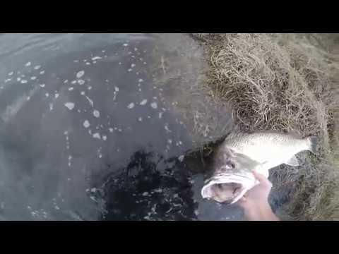 Big Cob Caught Bonza Bay East London