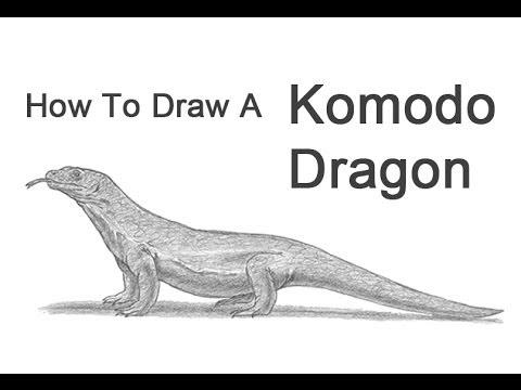 How To Draw A Komodo Dragon Youtube