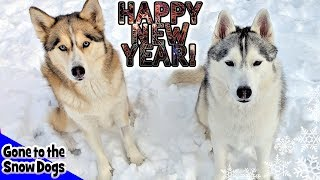 Huskies Wish You a Happy New Year in the SNOW