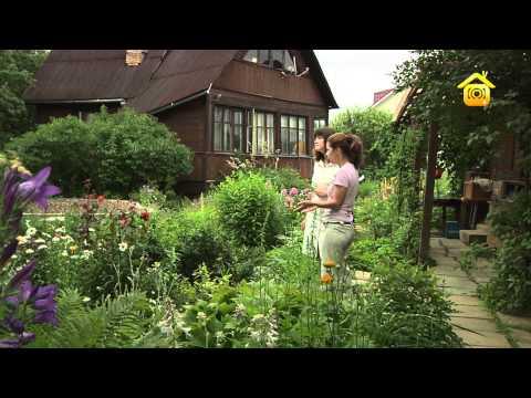 видео: Сказочный ландшафт своими руками // forumhouse