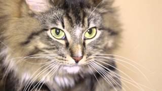 АкваМарис против аллергии - и подруги дышат, и кошки целы // 100.000.001-ая причина купить АкваМарис