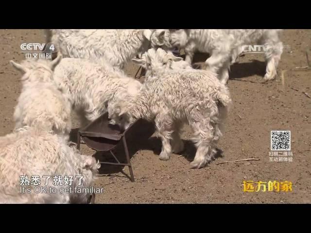 长城内外(168)暖暖白羊绒 多彩牧人家  【1080P】