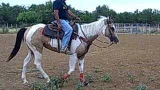 STORM 2 2006 APHA MARE LAREDO, TX