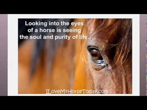I Love My Horse Today Inspiring Horse Photos Youtube