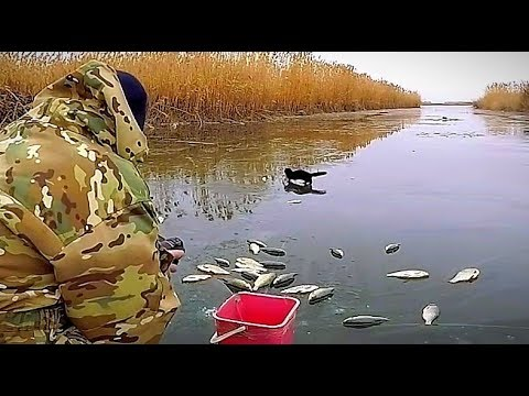 Я просто хотел поймать карася, а ловился крупный краснопёр. Зимняя рыбалка уже не по первому льду.