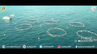[PELUANG USAHA] Keramba Jaring Apung Lepas Pantai (KJA Offshore) di Pangandaran