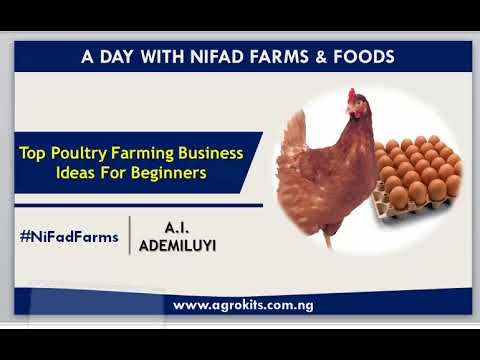Top Profitable Poultry Business Ideas That Generate 6Figures and Above
