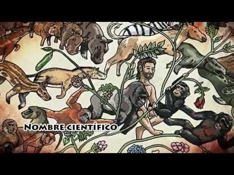 Todo Sobre El Homo Sapiens - Ciencia