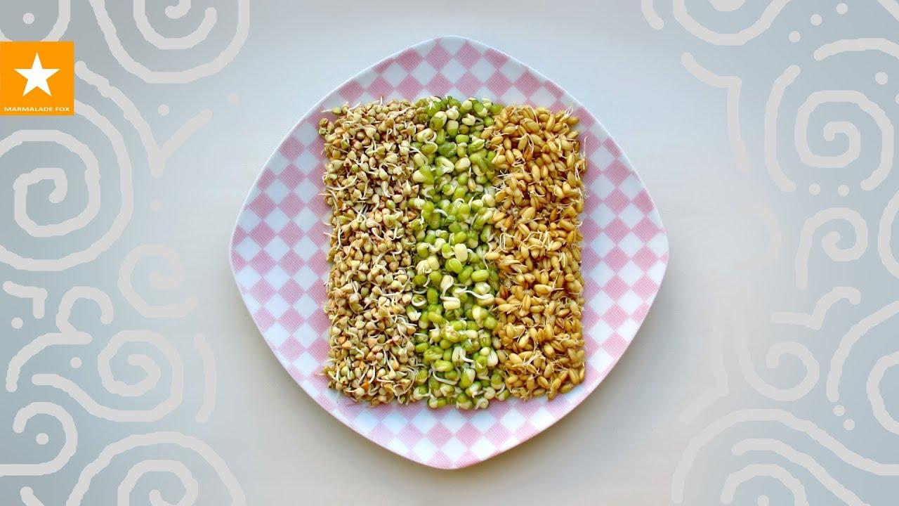 Продам посевное просо сорт юбилейное элита 15000грн. Куплю: покупаем горох,просо желтое, красное, пшеницу фуражную. Покупаем горох.